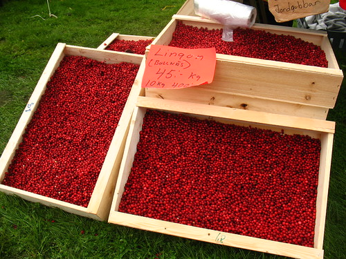 lingonberries for sale