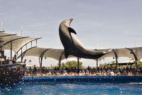 Flipping Dolphin