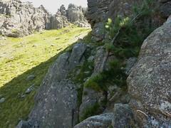 Dans la traversée Furcata - Quercitella : la vire exposée menant à la pente d'herges du col S de Quercitella