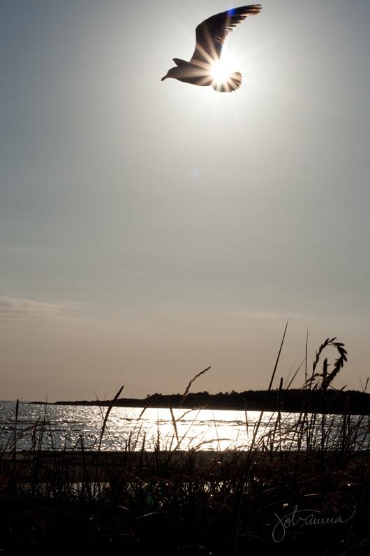 sunshine_bird