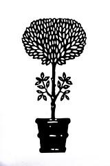 Grow (Thomas Hawk) Tags: bw usa unitedstates florida miami unitedstatesofamerica miamidesigndistrict miamidadecounty