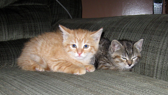 A Pair of Kittens