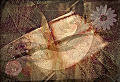Hay un horizonte esperando por ti... (conejo721*) Tags: flores argentina amor ojos silla palabras mardelplata pájaro sentimiento poesía poema rostrodemujer conejo721
