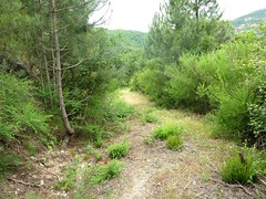 Sentier du ruisseau de Sainte-Lucie, partie démaquisée