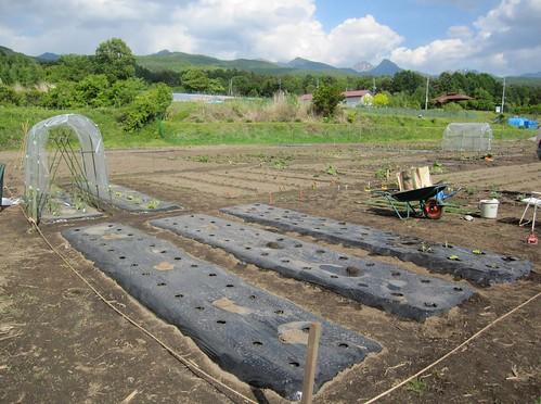 植付け繁忙期の畑 2010年6月4日 by Poran111