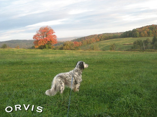 Orvis Cover Dog Contest - Chelsea