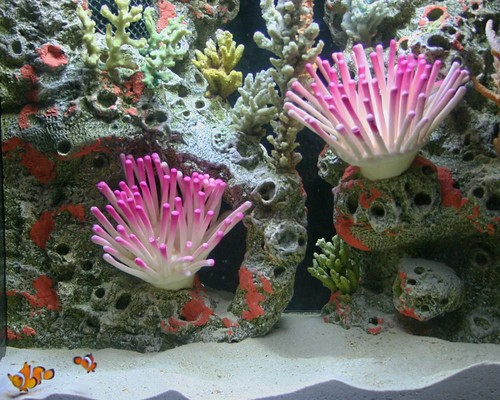 among the 75 species of fish at the new aquarium at turtle back zoo in ...