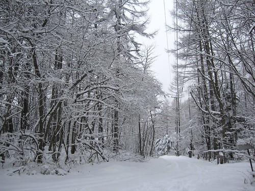3月の積雪/山荘前の道路 3月8日朝 by Poran111