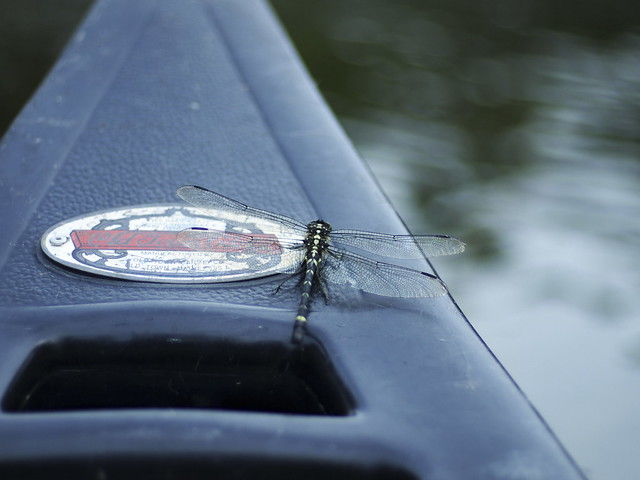 dragonfly on a canoe
