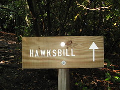 Hawksbill Trail sign