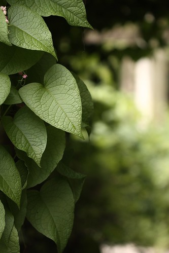 bushel of leaves