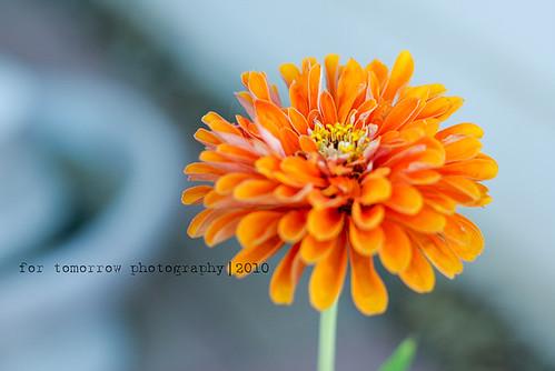 week 39: orange