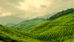 Ever green, never blue (iAreef) Tags: india green garden landscape nikon tea munnar