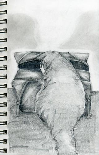 sketch255
