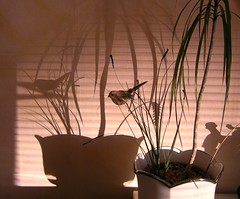 Shadows and Reflection on the Wall (Rosa Dik 009 -- on & off) Tags: light shadow plants colors wall reflections jalousie loweraustria wienerneustadt abigfave september2010