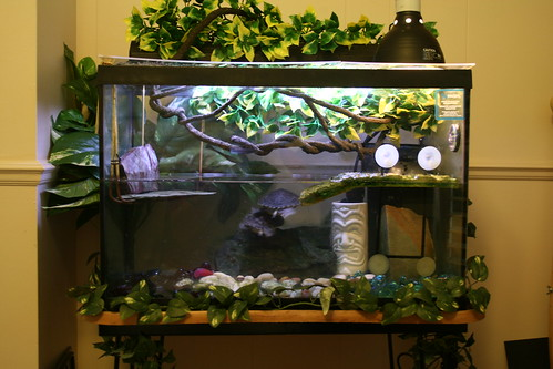 Turtle Tanks A Tank Set Up Differs From Fish Pictures