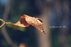 Benvenuto Mister Autunno (Ro Ville) Tags: autumn photoshop otoo autunno cs4 nikond60