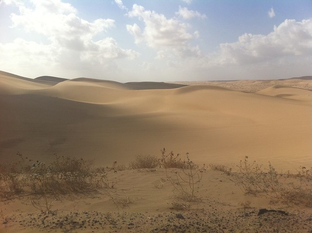 The Dunes of the Yuha Desert