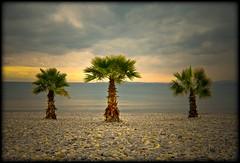 Cote dAzur (NPPhotographie) Tags: ocean sky sun 3 france tree art beach water stone evening magic horizon creative oberberg mystic mywinners platinumphoto artofimages bestcapturesaoi bestofmywinners elitegalleryaoi artistoftheyearlevel3 artistoftheyearlevel4