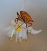 "insect (aziouezmazouz) Tags: macro cute nature colours vivid beautifulscenery bellissima macroinsect naturesfinest awesomeshot vibrantcolours beautifulcapture naturewatcher macrolife ""flickraward"""