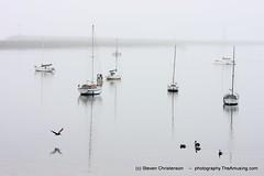 Harbor Silence [IMG_120975] (Steven Christenson) Tags: california blue white pelicans birds fog reflections boats harbor gray highkey masts halfmoonbay stevenchristenson photographytheamusingcom
