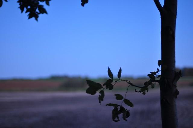 good bye summer moon