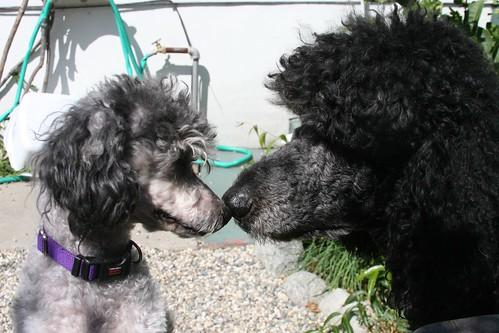 Violet & Theo