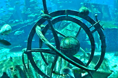 The Lost Chamber (Studio Sarah Lou) Tags: travel summer fish aquarium dubai uae middleeast resort atlantis unitedarabemirates thepalm lostchamber