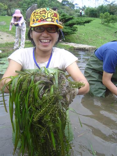 生態工作假期工作人員清理池中水蘊草。
