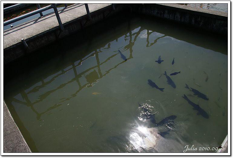 八甲魚場 (6)