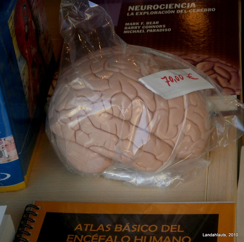 Brain for sale