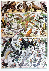 1031065 (El Bibliomata) Tags: old art birds illustration century vintage book arte antique illustrated libro illustrations drawings books aves engraving plates dibujos antiguo xix 19th engravings ilustraciones siglo grabados lminas ilustrado bibliomata pajajros