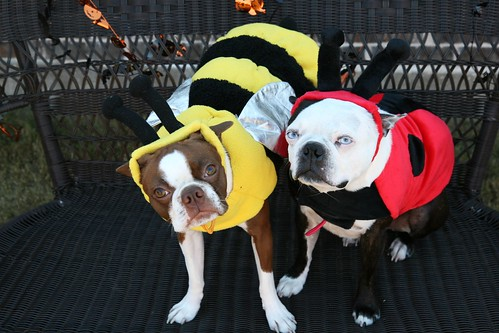 The Bee & the Lady Bug!