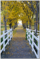 A Bridge to somewhere . . . (D.Spence Photography) Tags: autumn canada fall leaves pentax reddeer rwethereyet