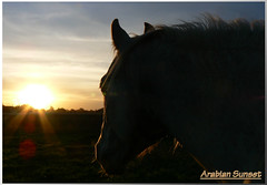 Arabian Sunset (Atardecer Arabe) (Valentina_LOVES_her_new_Canon!) Tags: sunset horse naturaleza nature clouds caballo atardecer photography silueta