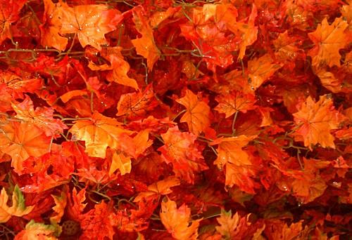 autumn cliche
