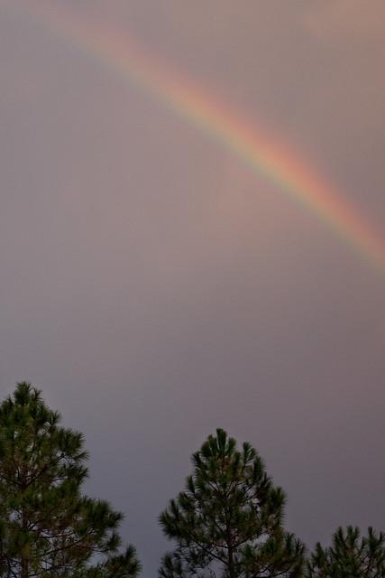 344/365 - Afternoon Rainbow