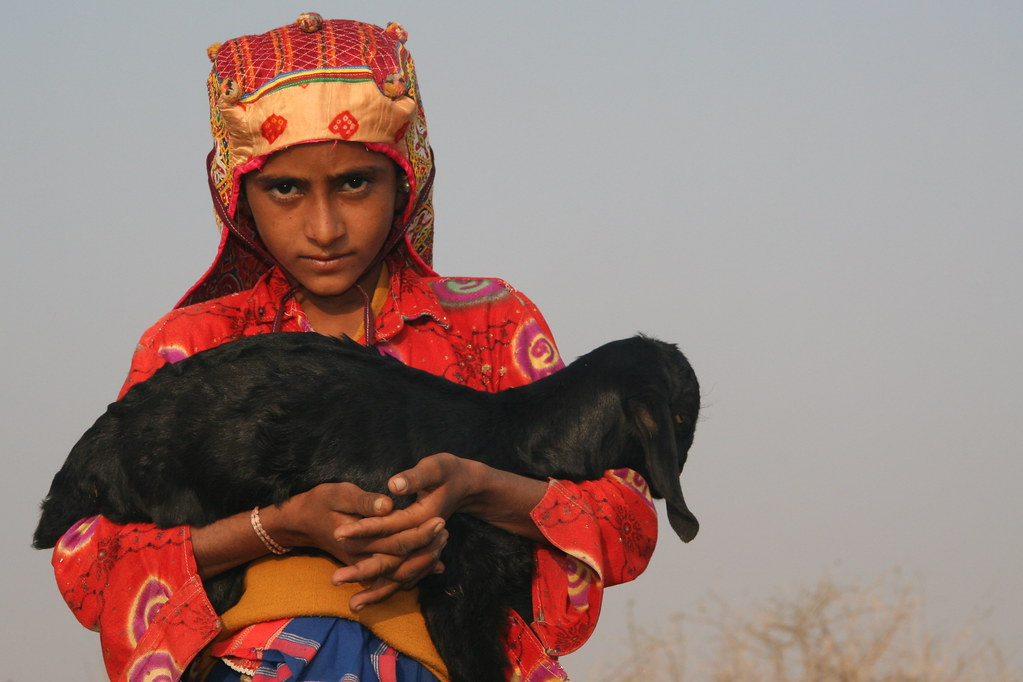 Asia - India / Gujarat - Rabari boy