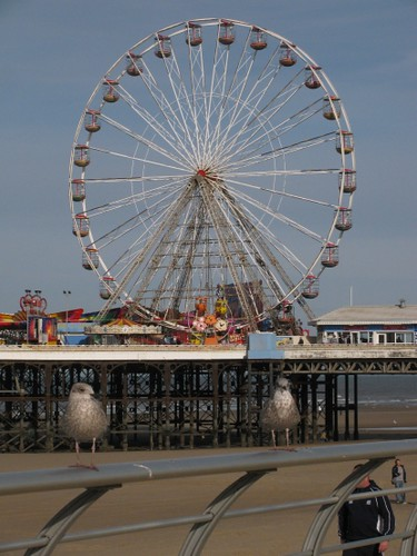 Seagulls and Central Pier