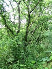 531008 เตาเผาถ่านกรมป่าไม้ 051