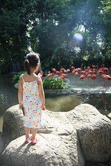 at jurong bird park