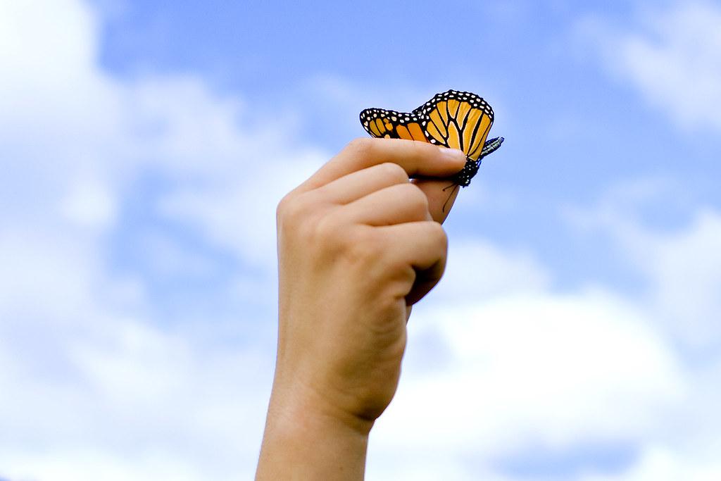 100904_ButterflyStandalone01