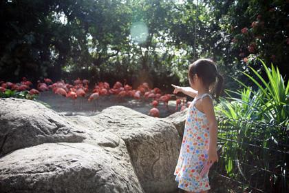 birdpark