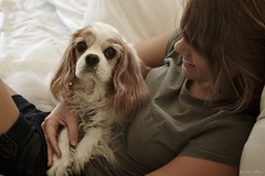 365: 161: Self: A Girl and Her Dog (jeanmariehoward) Tags: dog white selfportrait girl smile self october couch spaniel desaturated 365 taffy tones cavalierkingcharlesspaniel whitecouch canoneos40d desaturatedtones