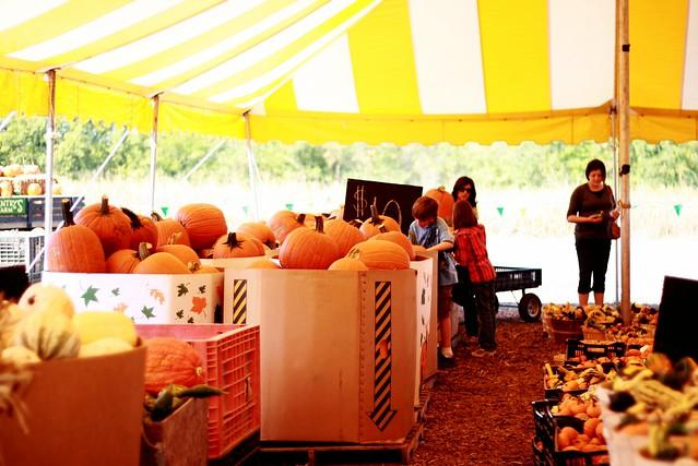 pumpkintent