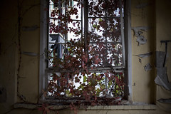 (Steven Sites) Tags: abandoned window leaves canon hospital eos 50mm vines peeling paint mark decay f14 maryland ii frame 5d steven asylum sites cracking tuberculosis henryton tumblr stevensites