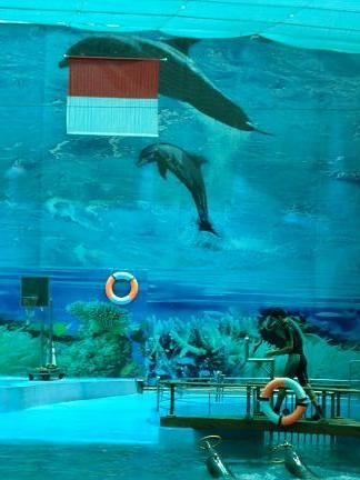 lumba lumba indonesia