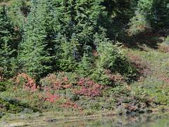 Fall at Eunice Lake.