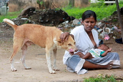 Breastfeeding (martien van asseldonk) Tags: woman dog srilanka breastfeeding negombo martienvanasseldonk