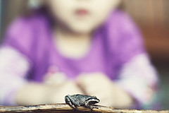 a froggy friend.... (tolly p) Tags: fall yard jump friend dof purple bokeh daughter frog stick slimy